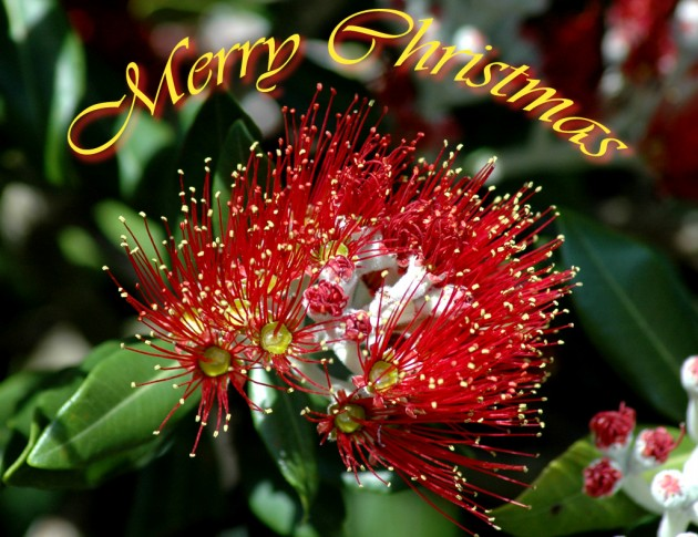 Happy-Christmas-Greeting-Cards-Designs-Pictures-Image-Beautiful-Christmas-Cards-Photo-Wallpapers-4