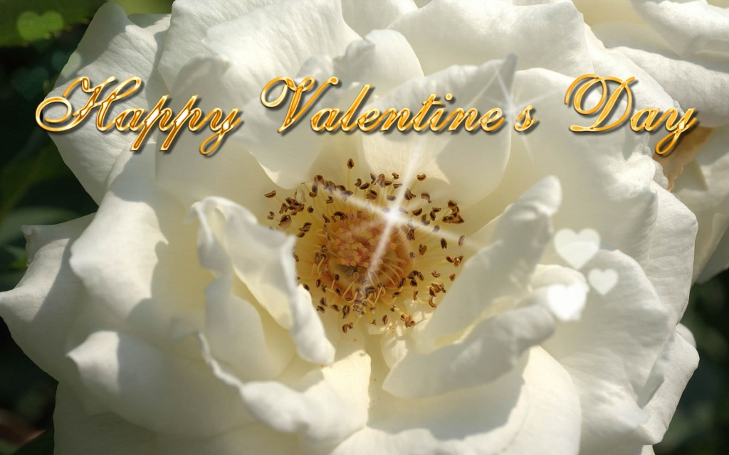Happy-Valentine,s-Day-ECards-Pictures-Valentine-Rose-Flower-Card-For-Love-You-Him-Her-Photo-5