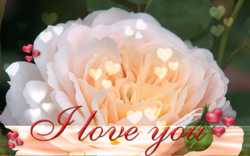 Happy-Valentine,s-Day-ECards-Pictures-Valentine-Rose-Flower-Card-For-Love-You-Him-Her-Photo-7