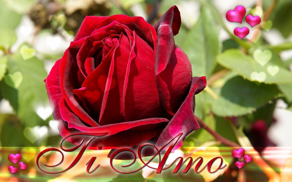 Happy-Valentine,s-Day-ECards-Pictures-Valentine-Rose-Flower-Card-For-Love-You-Him-Her-Photo-8
