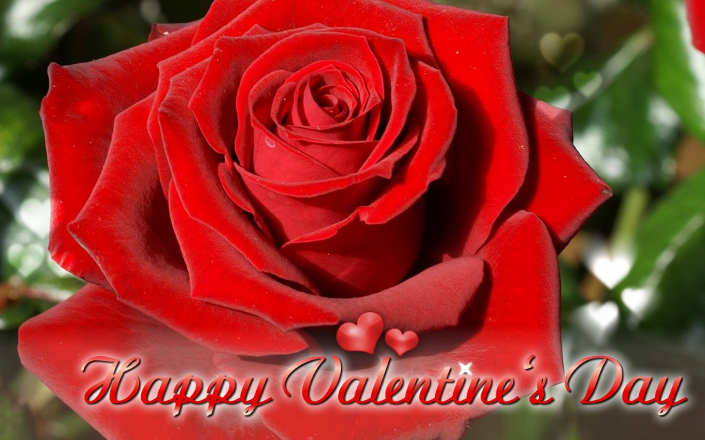 Happy-Valentine,s-Day-ECards-Pictures-Valentine-Rose-Flower-Card-For-Love-You-Him-Her-Photo-9