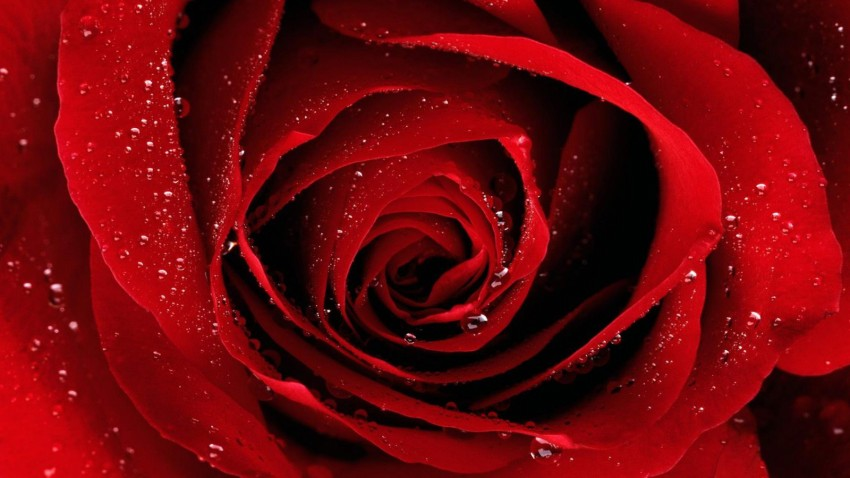 Valentine,s-Day-Red-Rose-Flower-Greeting-Cards-Pictures-Valentine-Gifts-Valentines-Love-Heart-Card-Image-