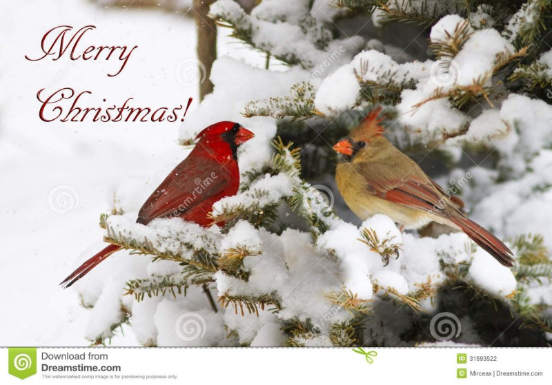 Christmas-Greeting-Cards-Pictures-Christmas-Idea-Gift-Lights-Card-Design-Photos-13