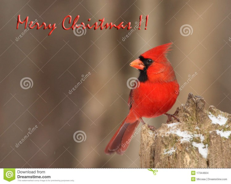 Christmas-Greeting-Cards-Pictures-Christmas-Idea-Gift-Lights-Card-Design-Photos-2