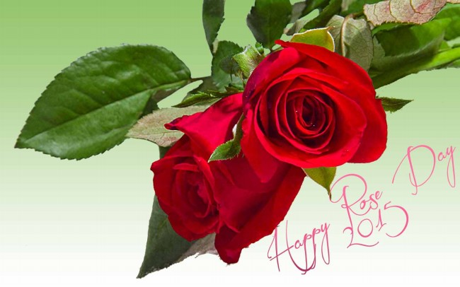 Valentine,s Day Greeting Cards Pictures-Image-Valentine Rose-Flower Day Card Photos-15